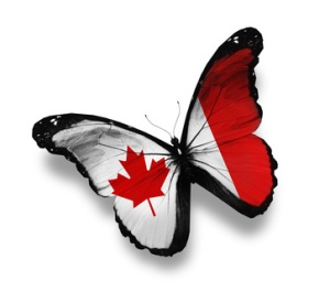 Canadian flag butterfly, isolated on white