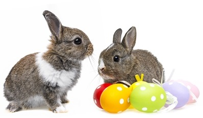 little rabbit and easter eggs isolated